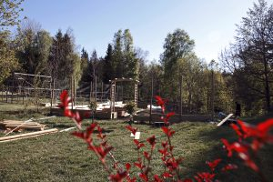 Att skapa en köksträdgård – Del 2